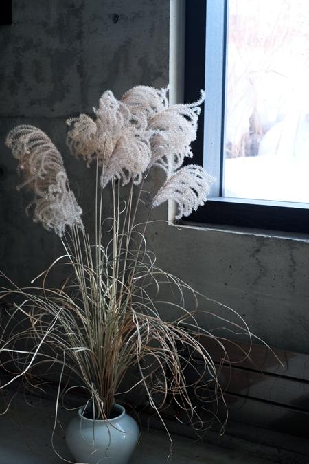イトススキの枯れ穂12