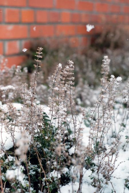 赤レンガとタイムと雪12