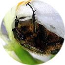 iris_japonica005.jpg