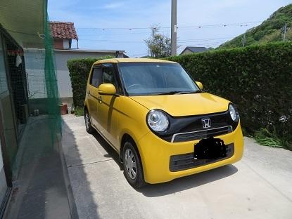 黄色いたぬき♪
