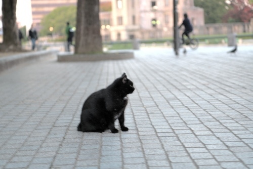 広島平和公園 黒猫