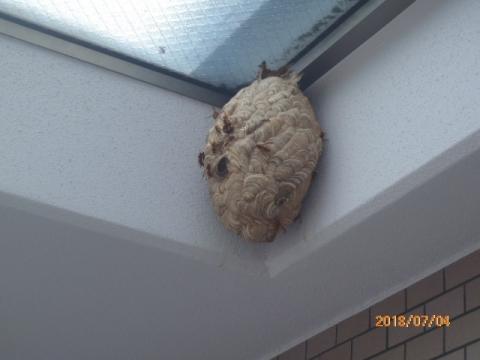 マンションベランダに作ったスズメバチの巣