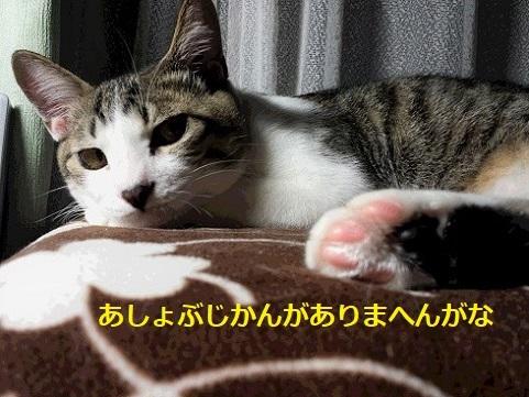 20141130_212035 (2)