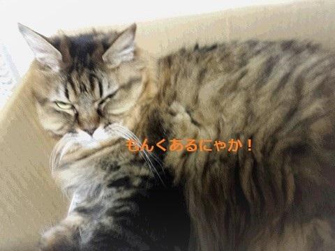 猫砂2 (2)