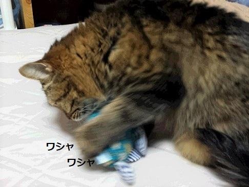 猫キッカー1 (2)