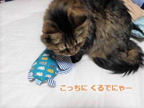 猫キッカー2 (2)