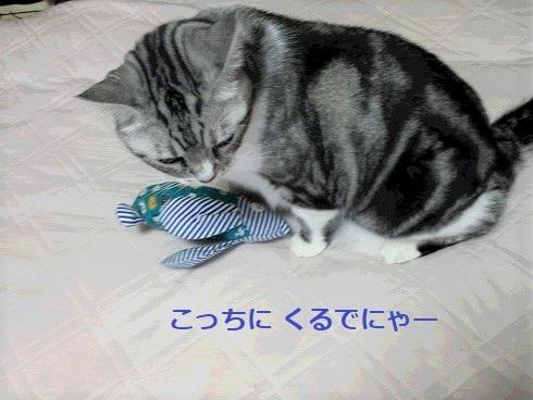 猫キッカー3 (2)