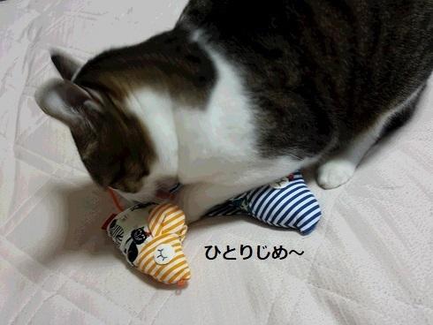 猫キッカー7