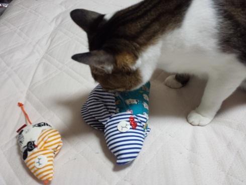 猫キッカー9