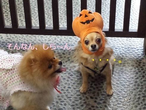 かぼちゃとちょろ1