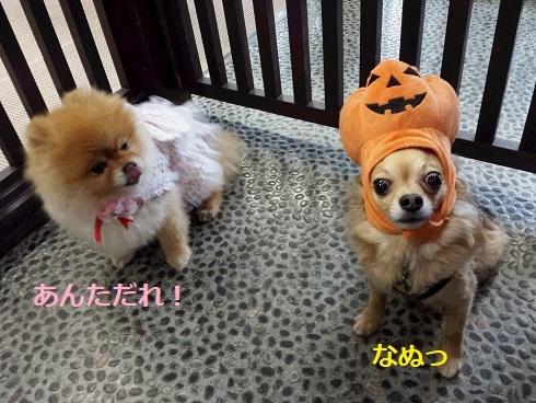 かぼちゃとちょろ2