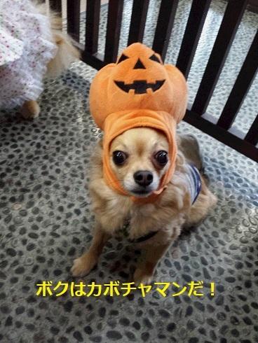 かぼちゃとちょろ3