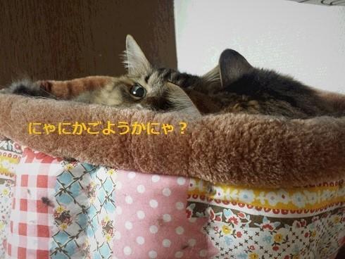 姉妹にゃん2 (2)
