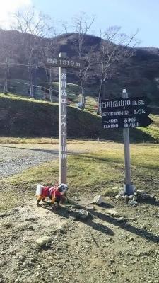谷川岳 キャバマル ワンコとお出かけ