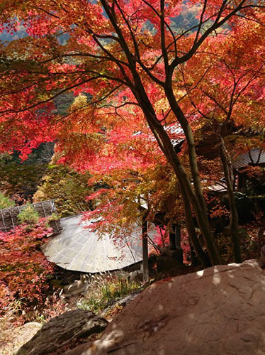 摘み草の紅葉