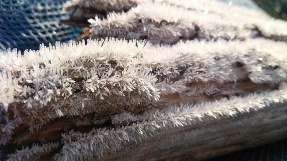 2017-11-28 畑の霜2