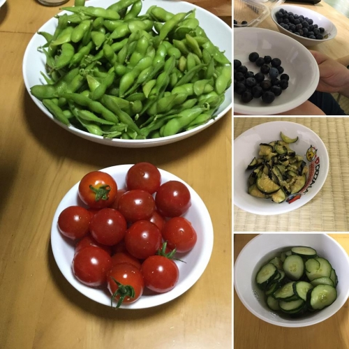 JA東京スマイル管内農業収穫体験バスツアー