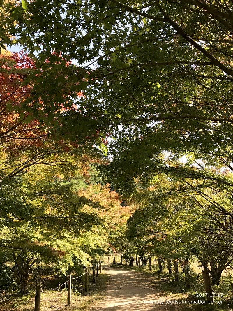 紅葉情報2017 国宝白水阿弥陀堂 [平成29年10月27日(金)更新]10