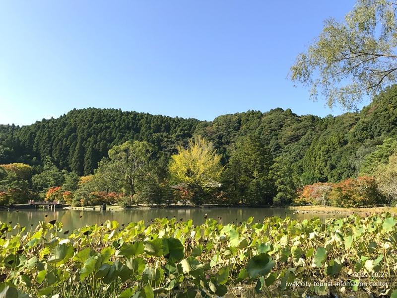 紅葉情報2017 国宝白水阿弥陀堂 [平成29年10月27日(金)更新]12