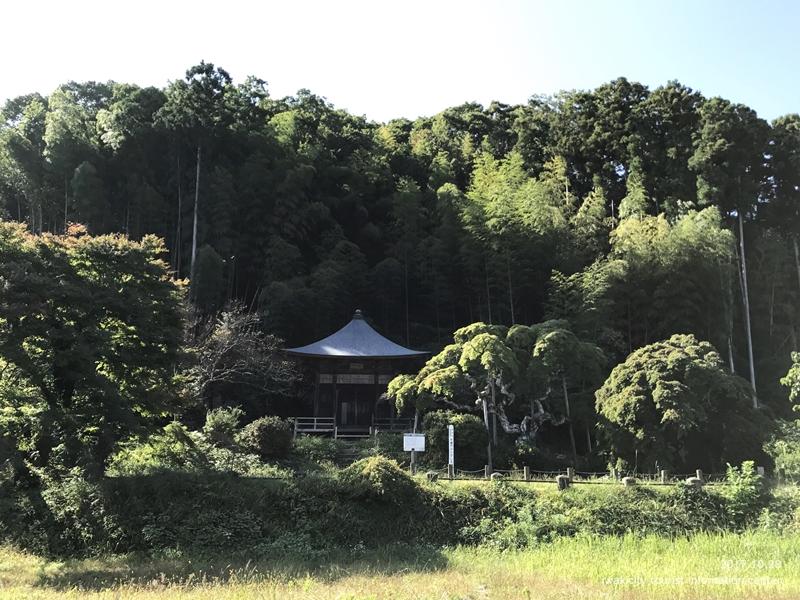 紅葉情報2017 国指定天然記念物「中釜戸のシダレモミジ」 [平成29年10月28日(金)更新]1