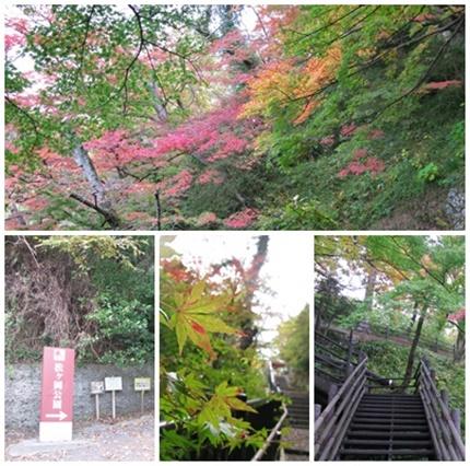 紅葉情報2017 松ヶ岡公園[平成29年11月15日(水)更新]