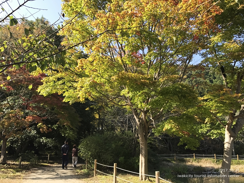 紅葉情報2017 国宝白水阿弥陀堂 [平成29年10月27日(金)更新]3
