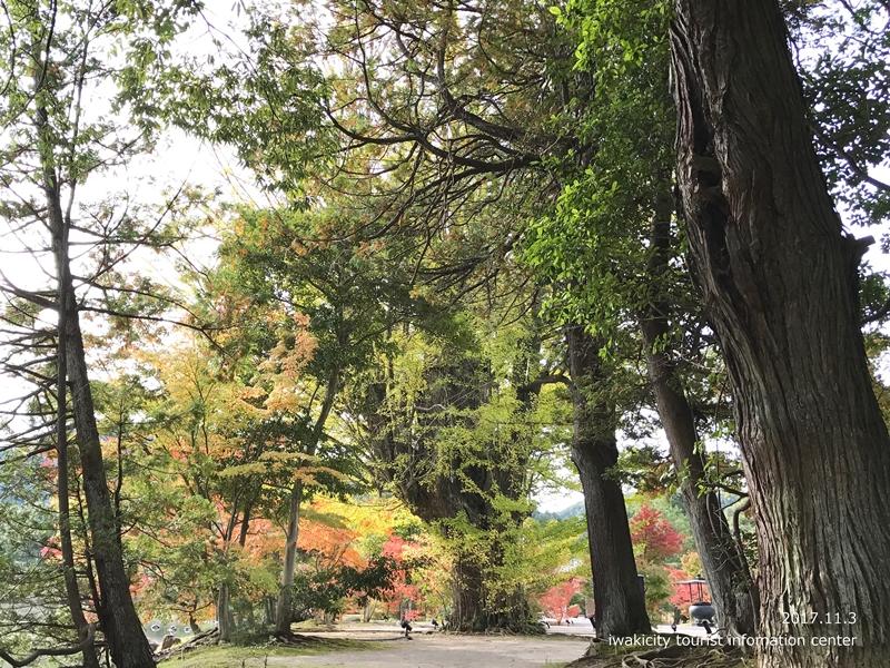 紅葉情報2017 国宝白水阿弥陀堂 [平成29年11月3日(金・祝)更新]5