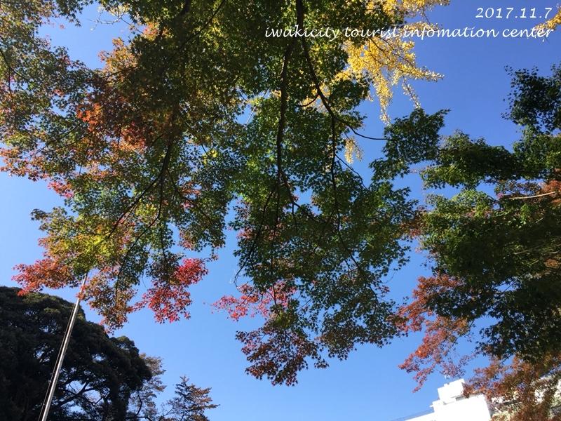 紅葉情報2017 温泉神社 [平成29年11月7日(火)更新]5