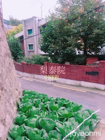 梨泰院_白菜畑_予告_4