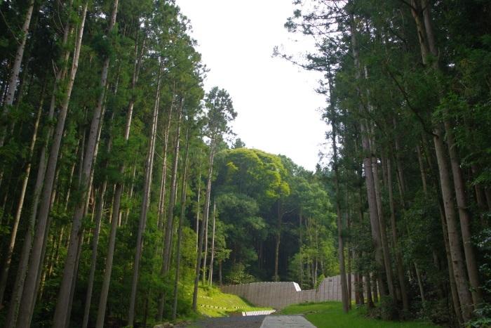杉並木と砂防ダム