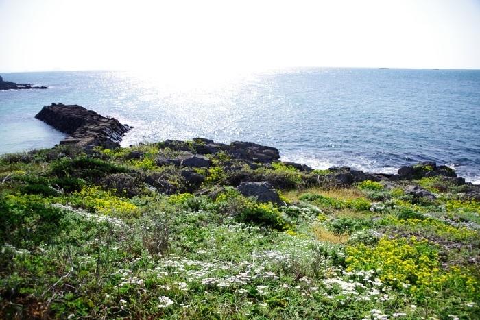煌めく海と花