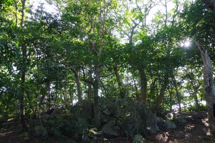 長者ヶ森の木々