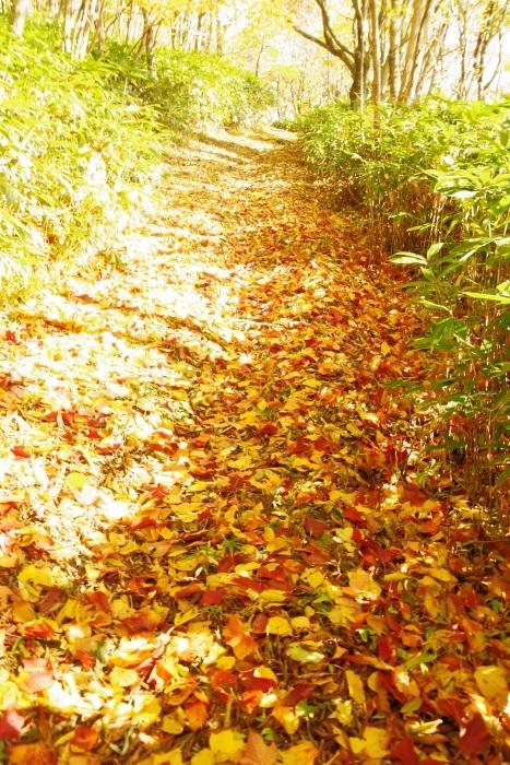 秋の羅漢山