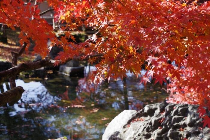 池を彩る紅葉