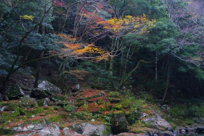紅葉、落ち葉と苔