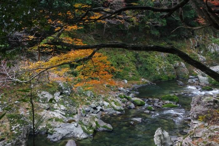 黄葉の長門峡