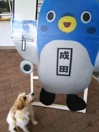 2017-09-26 成田 大好きなうなりくんと
