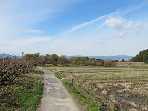 山辺の道 (94)