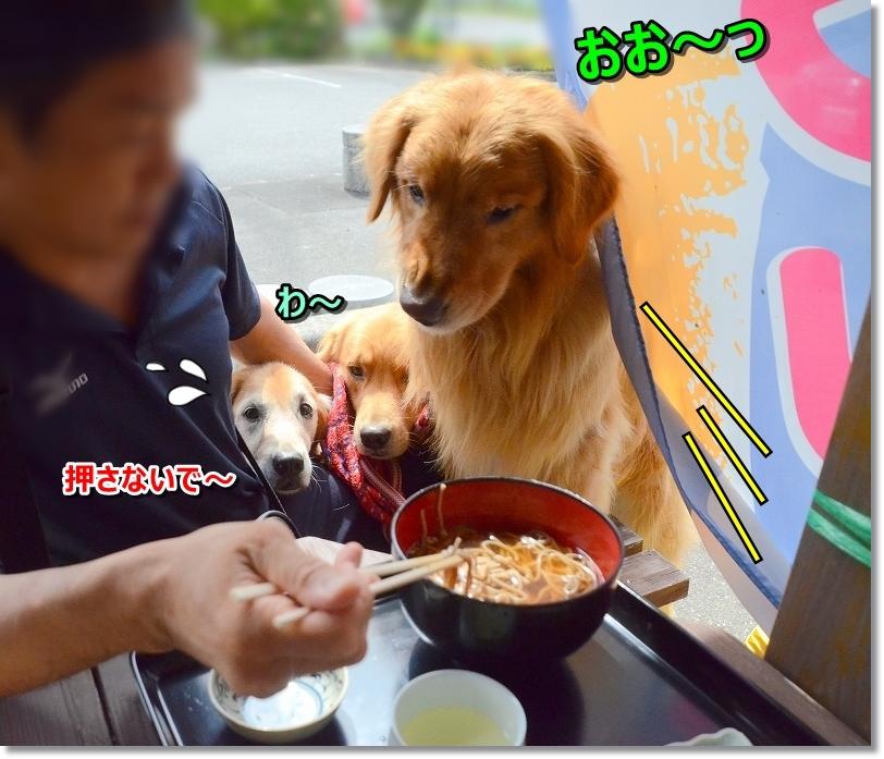 DSC_9518おお~