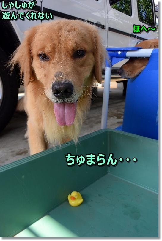 DSC_9345ちゅまらん