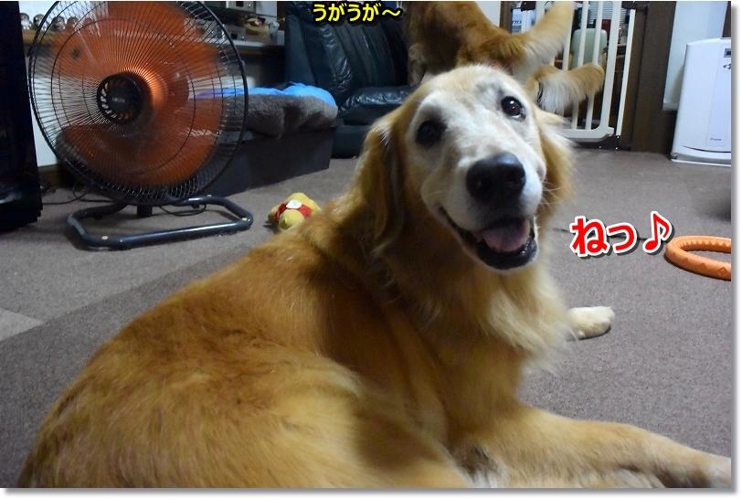 DSC_9491 ねっ♪