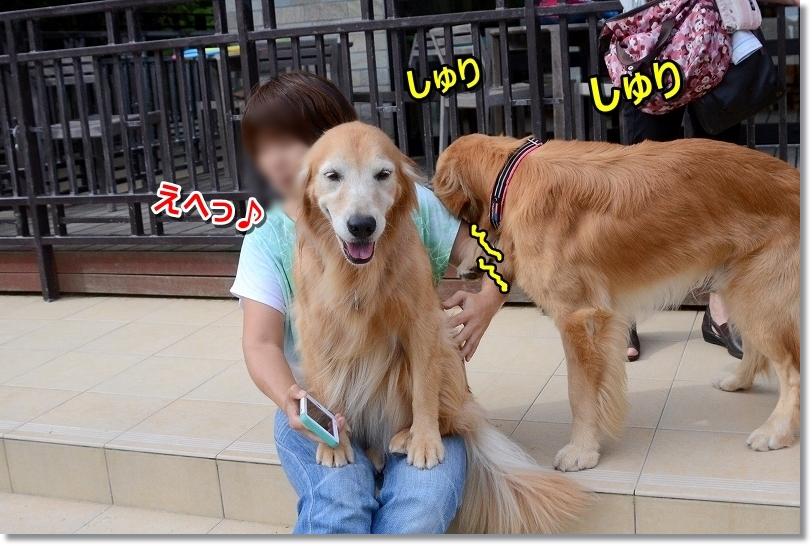 DSC_9589しゅりしゅり甘えんぼう