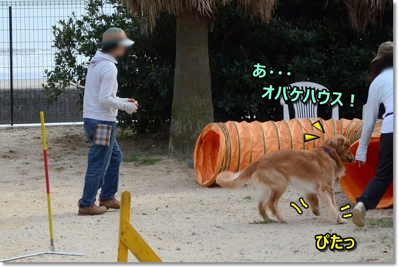 DSC_9896ぴた
