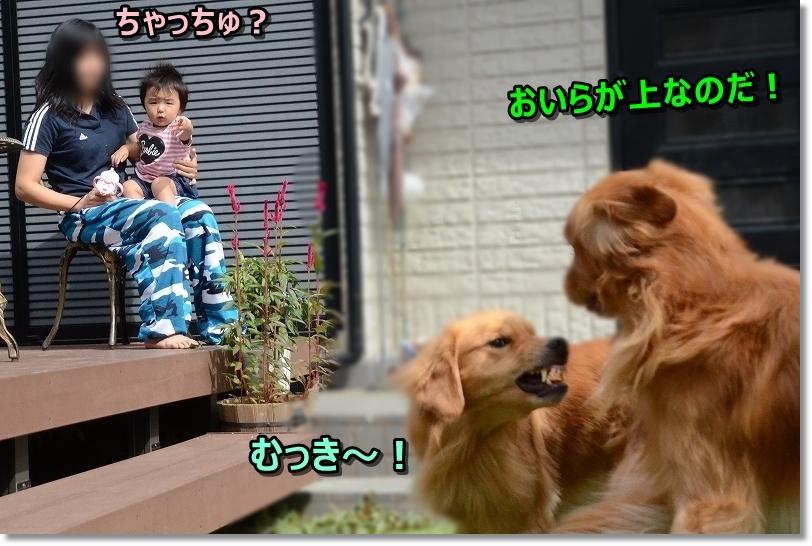 DSC_0011ちゃっちゅ?
