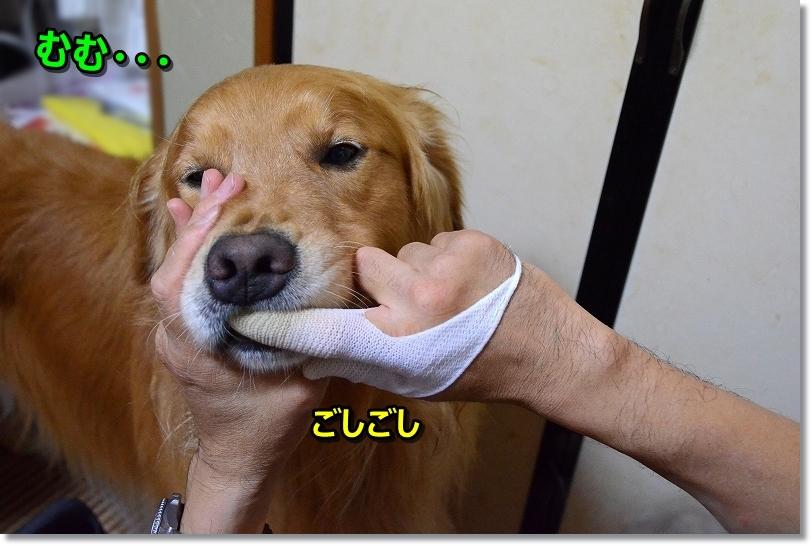 DSC_0097ごしごし