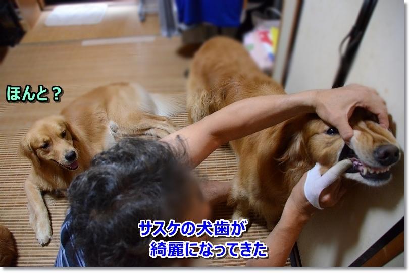 DSC_0102しゃしゅけがんばれ~