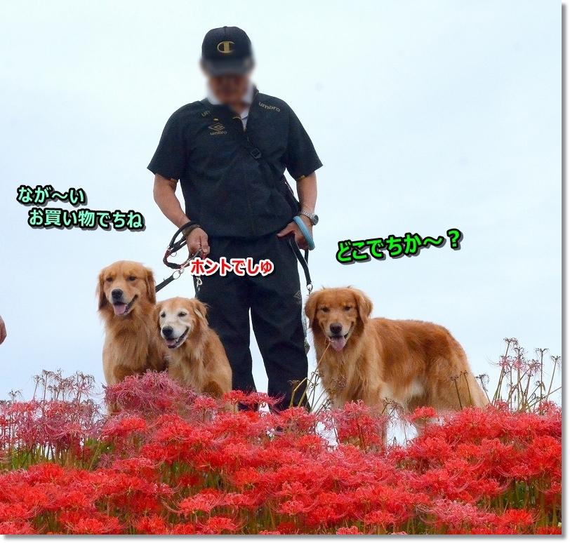 DSC_0885モっちゃん