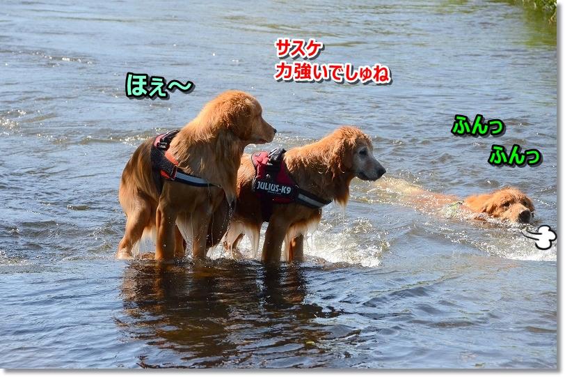 DSC_0356ほぇ~