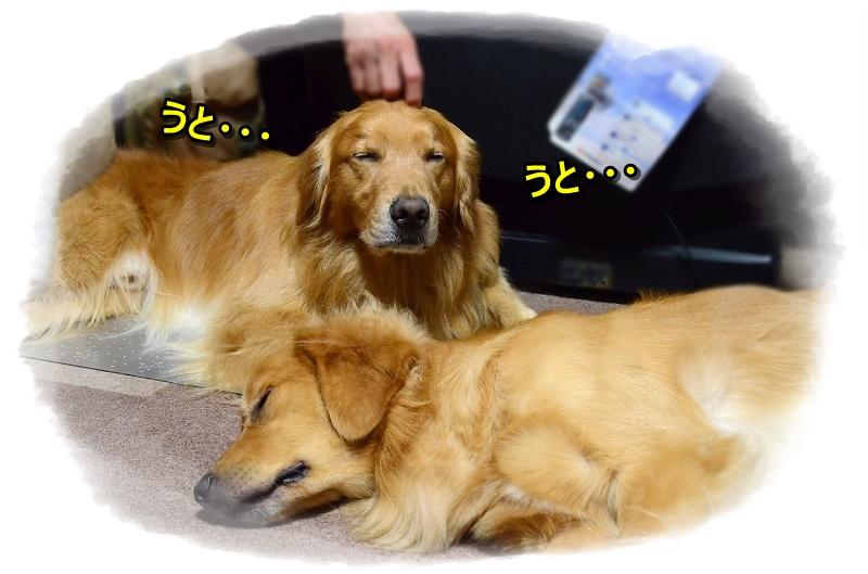 DSC_0383ぽへ~