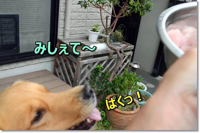 DSC_1149みしぇて~